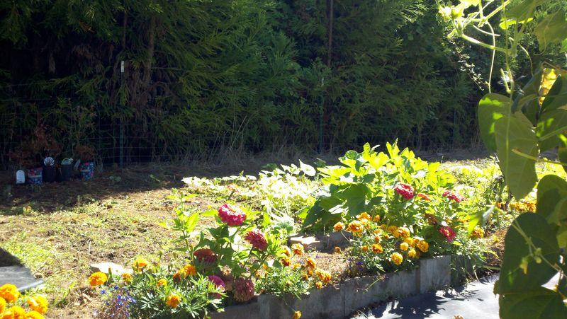 #Tater Tots Garden